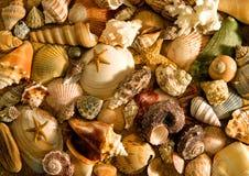 El mar descasca la disposición imagenes de archivo