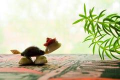 El mar descasca la tortuga Fotos de archivo libres de regalías