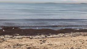 El mar en la playa de Arenal Balearic Island metrajes