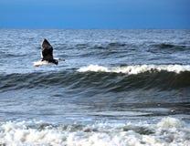 El mar maúlla Fotografía de archivo