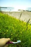El Mar Negro del prado salvaje en el centro turístico de Olimp   Fotografía de archivo