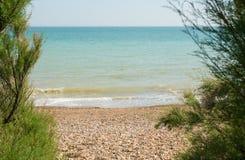El mar a través de árboles del Tamarisk sussex inglaterra imagen de archivo libre de regalías