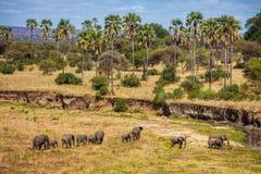 El marchar de los elefantes imagen de archivo
