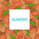 El marco coloreado cuadrado integrado por nuez de la almendra Ejemplo de la tarjeta del vector Las nueces, almendras dan fruto en Fotografía de archivo libre de regalías