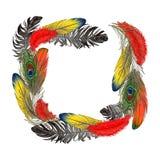 El marco cuadrado formó por las plumas de pájaro con el espacio para el texto libre illustration