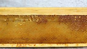 El marco de la colmena del colmenar con las abejas encera la estructura por completo de la miel fresca de la abeja en panales Fotos de archivo libres de regalías