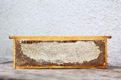 El marco de la colmena del colmenar con las abejas encera la estructura por completo de la miel fresca de la abeja en panales Ais Imagen de archivo