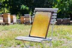 El marco de la colmena del colmenar con las abejas encera la estructura por completo de la miel fresca de la abeja en silla rústi Foto de archivo libre de regalías