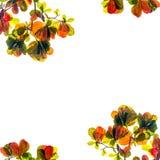 El marco de la naturaleza de las hojas coloridas en el fondo blanco Aislado Foto de archivo libre de regalías