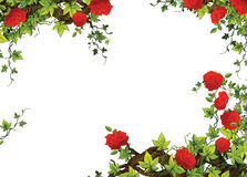 El marco de la rosa - frontera - plantilla - con las rosas - tarjetas del día de San Valentín - cuentos de hadas - ejemplo para lo ilustración del vector