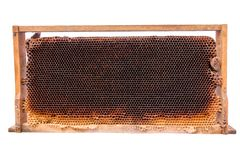 El marco de madera con el peine de la miel aisló el fondo blanco Fotos de archivo