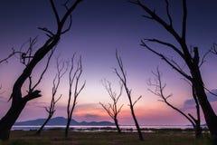 El marco del árbol muerto imagen de archivo libre de regalías