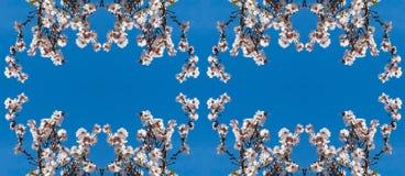 El marco doble de la almendra florece en las ramas de un árbol imagen de archivo libre de regalías
