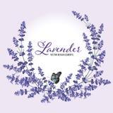 El marco floral con lavanda del otoño florece con la mariposa imágenes de archivo libres de regalías