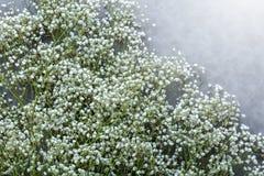 El marco floral hermoso con los lirios del valle florece en viejo Fotografía de archivo