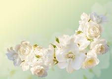 El marco horizontal hermoso con un ramo de rosas blancas con lluvia cae Fotografía de archivo libre de regalías