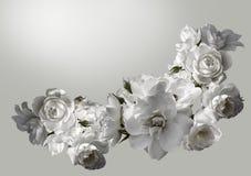 El marco horizontal hermoso con un ramo de rosas blancas con lluvia cae Imagen de tono blanco y negro Fotos de archivo libres de regalías