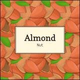 El marco rectangular en fondo de la nuez de la almendra Ejemplo de la tarjeta del vector Las nueces, almendras dan fruto en la cá Foto de archivo