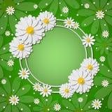 El marco redondo brillante hermoso con el papel 3d cortó manzanillas en fondo verde Imagenes de archivo