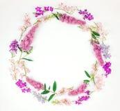 El marco redondo con el toadflax colorido florece en el fondo blanco Endecha plana, visión superior Fotos de archivo libres de regalías