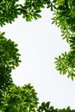 El marco verde de la hoja con blanco aisló el espacio de la copia Foto de archivo