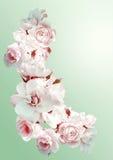 El marco vertical hermoso con un ramo de rosas blancas con lluvia cae Vintage que entona imagen Fotografía de archivo libre de regalías