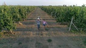 El marido y la esposa agrícola, rural con el niño corren con filas en manzanar metrajes