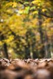 El marrón absolutamente seco deja a cubierta el camino de tierra del bosque en la estación del otoño de la caída Imagen de archivo