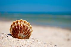 El marrón blanco de Shell miente en la arena en un fondo de las vacaciones de verano del mar azul y del cielo azul Imagenes de archivo