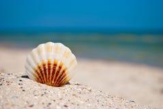 El marrón blanco de Shell miente en la arena en un fondo de las vacaciones de verano del mar azul y del cielo azul Imagen de archivo