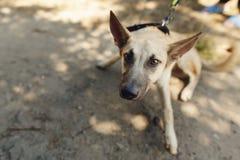 El marrón grande asustó el perro del refugio que presentaba afuera en parque soleado, Imagenes de archivo