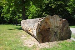 El marrón oscuro texturizó el árbol de madera natural que ponía en un parque Imagen de archivo