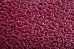 El marrón texturizó textura de la piel Fotografía de archivo libre de regalías