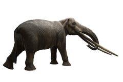 El mastodonte de Rhodopean, arvernensis de Anancus Fotos de archivo libres de regalías