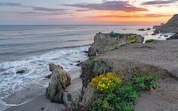 El Matador State Beach Wildflowers Royalty Free Stock Photography