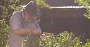 El mayor mayor que cultivaba un huerto retiró la edad del retiro de abuelo del hombre al aire libre metrajes