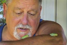 El mayor mira las ranas arbóreas verdes Fotos de archivo
