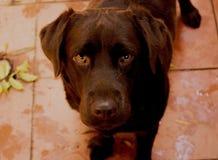 El mejor amigo humano ¡y también el animal leal en el mundo! imagen de archivo
