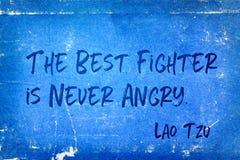 El mejor combatiente Tzu Fotos de archivo libres de regalías
