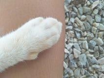 El mejor gato amistoso Foto de archivo libre de regalías