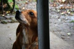 El mejor mendigo cuando se trata de la comida, petición del perro fotografía de archivo