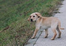 El mejor perro nunca Imagen de archivo libre de regalías