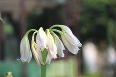 El mejor uso de la imagen de la flor para cualquier propósito Fotografía de archivo