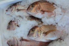 El mercado de los mariscos, los mordedores recién pescados pesca en el hielo foto de archivo libre de regalías