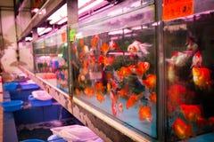 El mercado del pez de colores en Hong Kong Foto de archivo libre de regalías