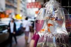El mercado del pez de colores en Hong Kong Fotos de archivo