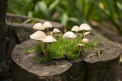 El micelio Fotografía de archivo libre de regalías