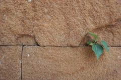 El mini árbol será crecimiento para arriba Foto de archivo