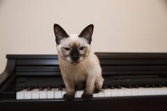 El minino está a punto de saltar del piano Fotografía de archivo libre de regalías
