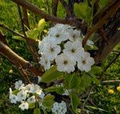 El mirar abajo algunos pequeños flores blancos fotos de archivo libres de regalías